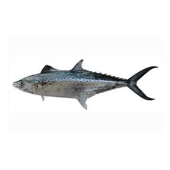 خرید آنلاین ماهی و میگو تازه